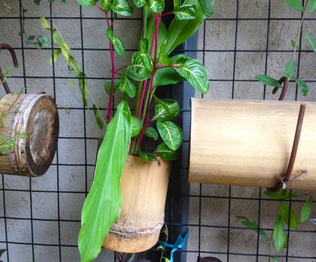 bambooHanging2