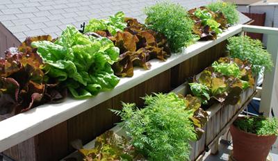 Huertos urbanos: la cosecha en el balcón