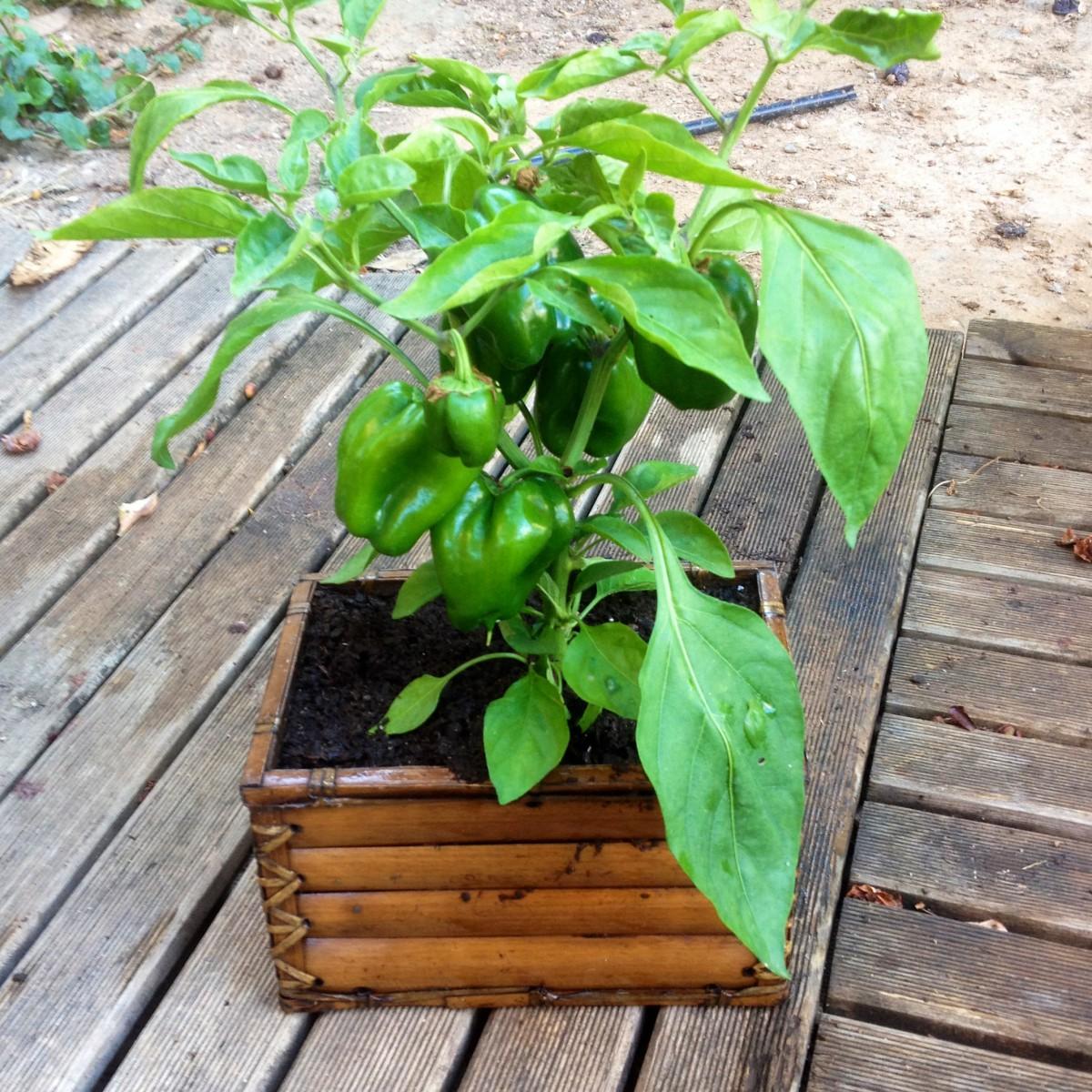 Reciclando y cultivando, ando